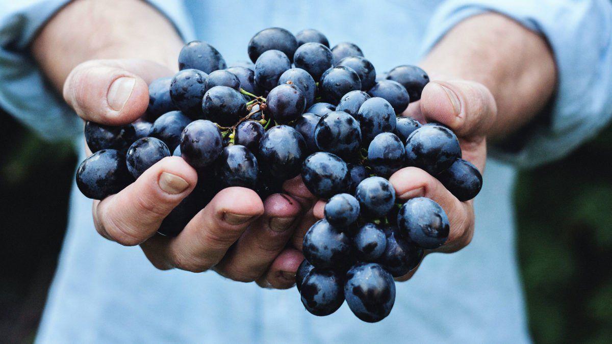 Au Japon, un homme de 73 ans s'est fait arrêter pour avoir volé un grain de raisin