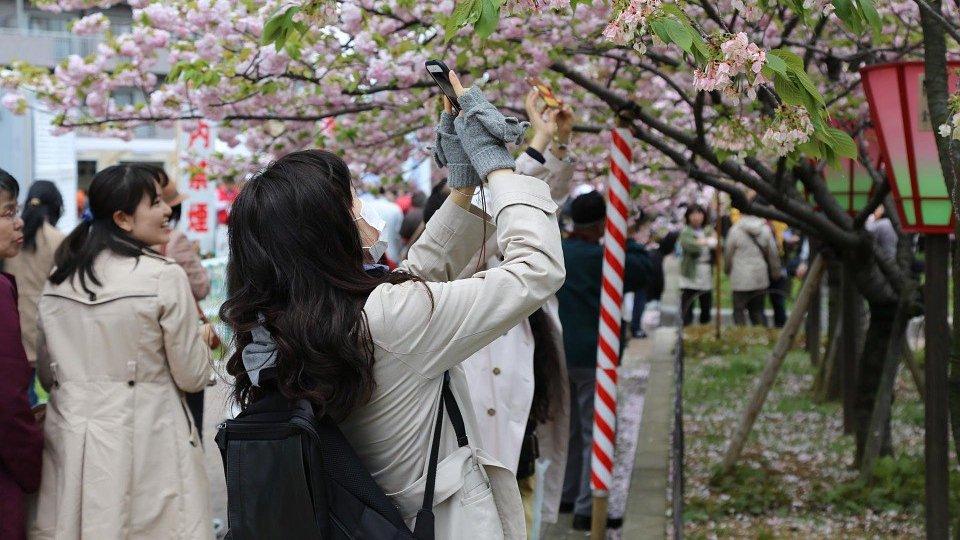japan-723665_960_720