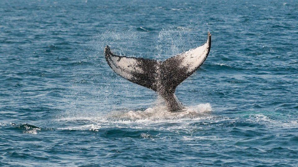 whale 630256 960 720 e1545997981446