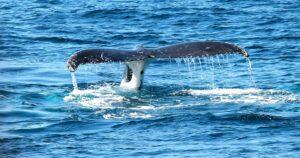 une baleineee