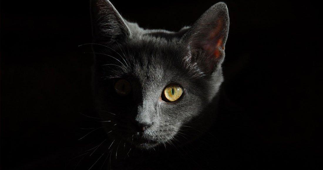 une chat umashima