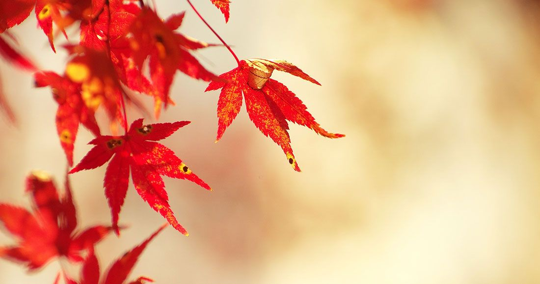 une automne japon