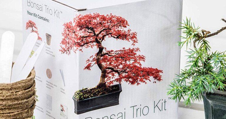 une kit bonsai