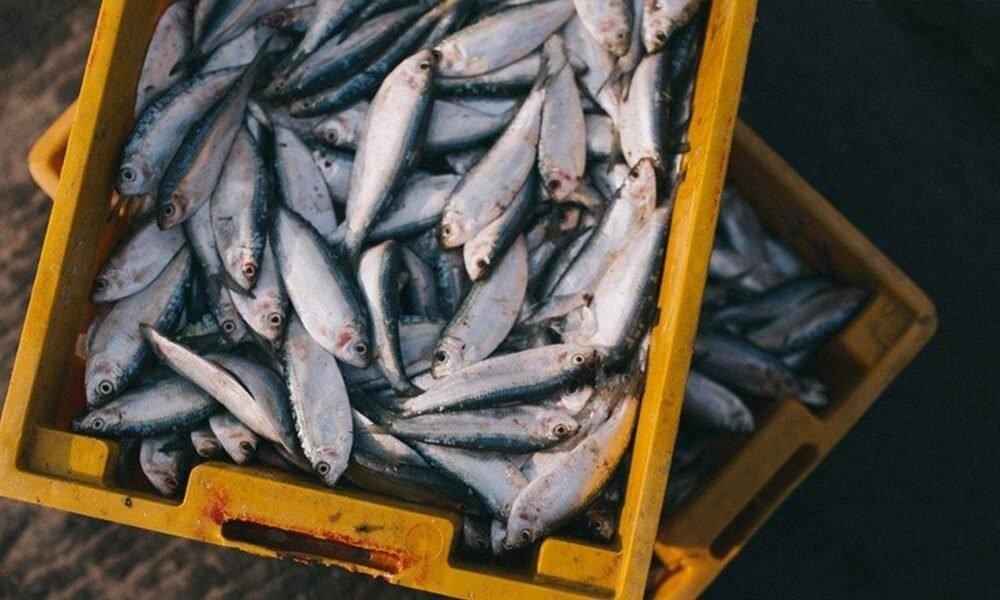 poisson fukushima