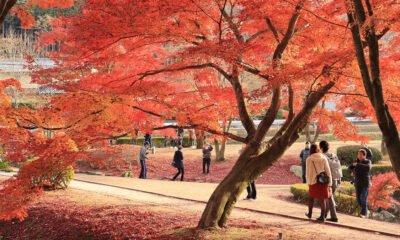 une parc japon