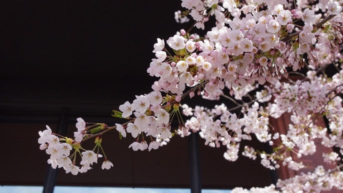 , Les fleurs japonaises et leur sens, Furansu