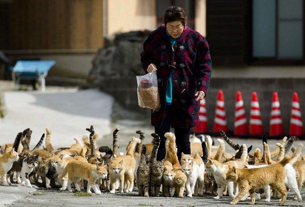 Des chats sur l'île de Aoshima avec une résidente