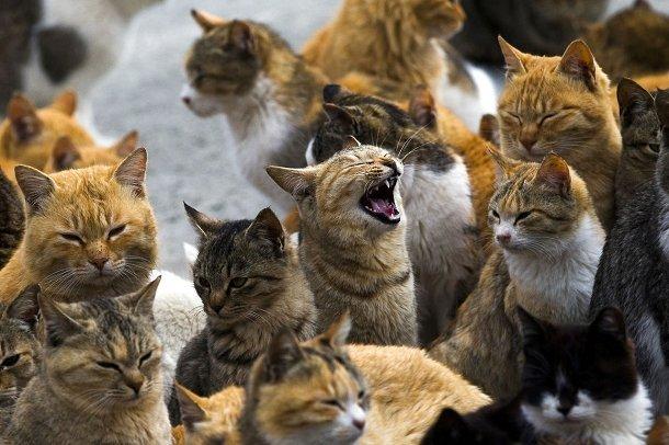Des chats sur l'île de Aoshima