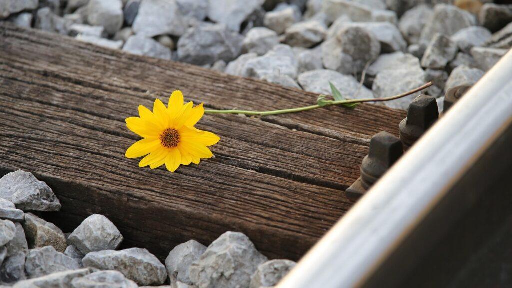 Une fleur sur une voix ferrée symbole du suicide au Japon