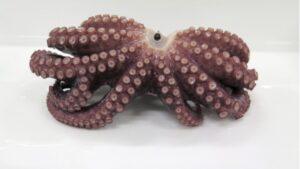 pieuvre a 9 tentacules