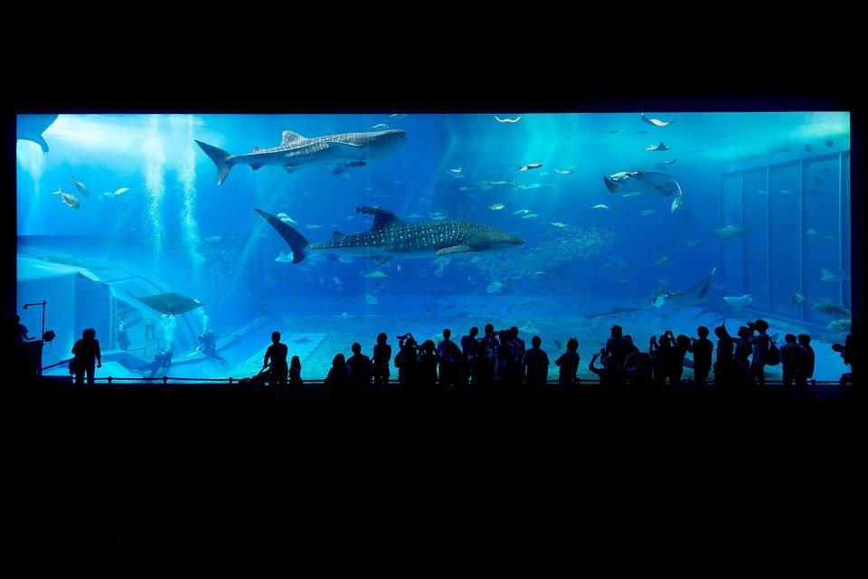 Aquarium a Okinawa